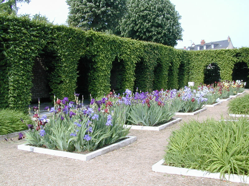 Garden of medicinal herbs and royal flowers©