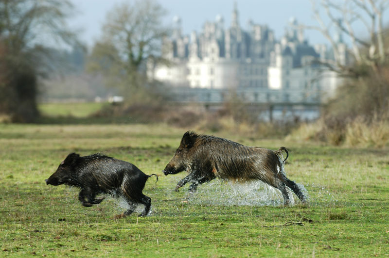 ©Domaine National de Chambord - F-Forget©