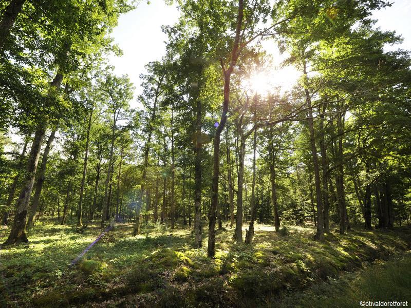 OT Val d\'Or et Forêt©